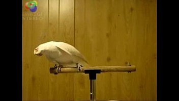 bird enjoys egyptian music 0001